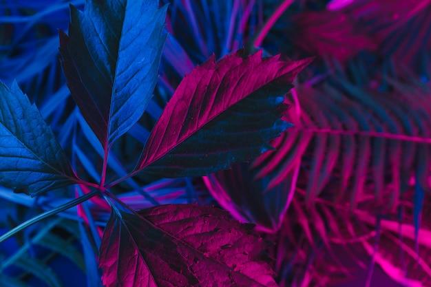 Folhas tropicais em um fundo escuro