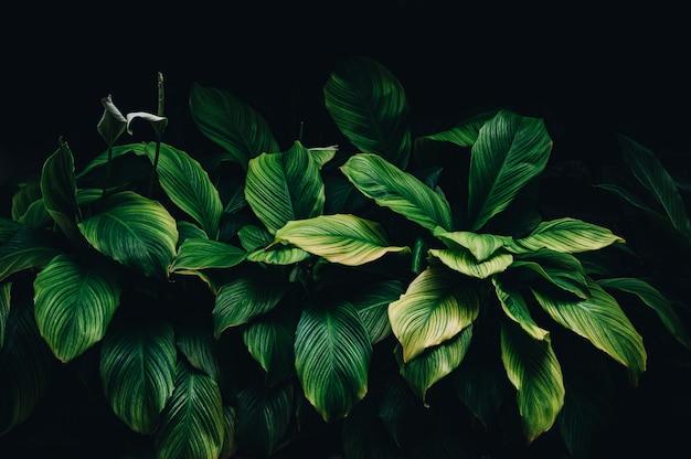 Folhas tropicais, folhagem verde escura, natureza abstrata, fundo