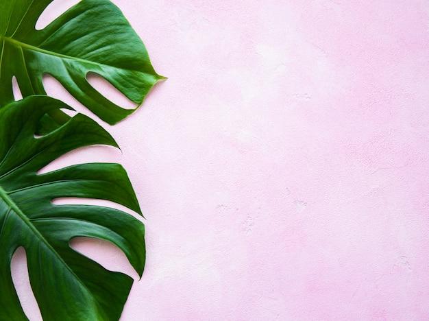 Folhas tropicais monstera