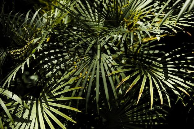 Folhas tropicais na selva