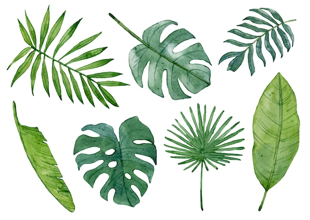 Folhas tropicais verdes da aquarela isoladas.