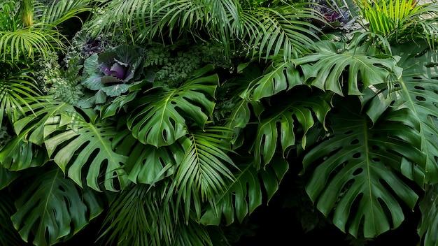 Folhas tropicais verdes de monstera, samambaia e palmeiras o arranjo floral de arbusto de planta de folhagem de floresta tropical em fundo escuro, fundo natural natureza natureza textura.