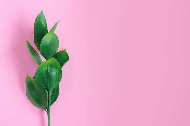 Folhas tropicais verdes em um rosa. natureza mínima na moda elegante