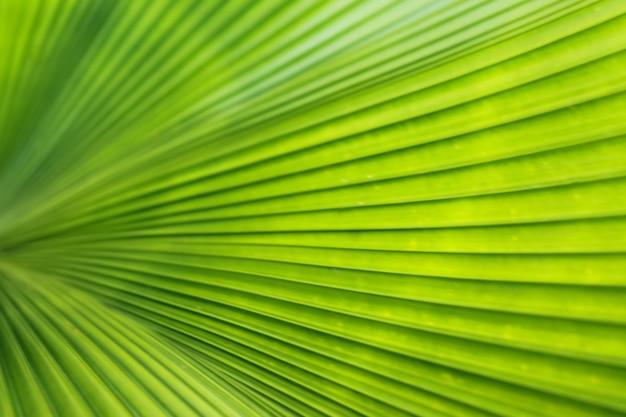 Folhas tropicais verdes. fundo abstrato da textura. linhas de folhas de palmeira.