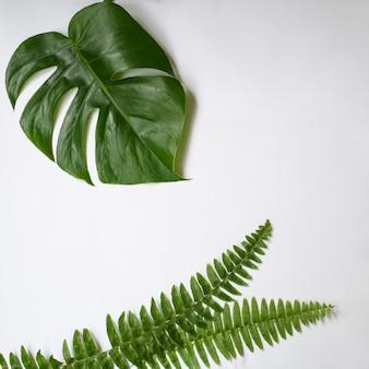 Folhas tropicais verdes no fundo branco.