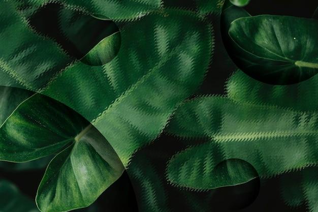 Folhas tropicais