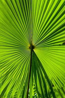 Folhas únicas de uma bela planta