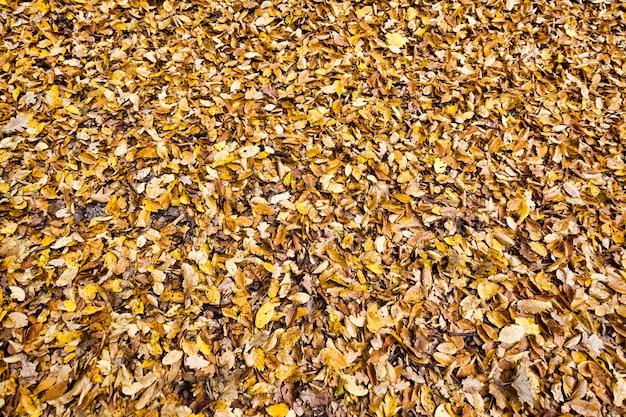 Folhas velhas de árvores caídas
