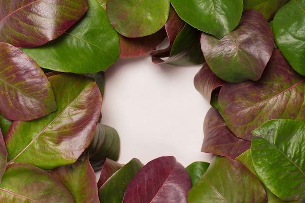 Folhas verde-vermelhas no centro de um fundo de moldura quadrada branca