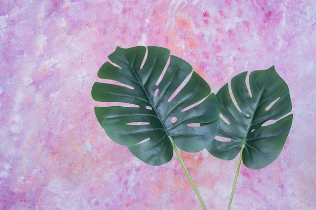 Folhas verdes artificiais na superfície colorida.