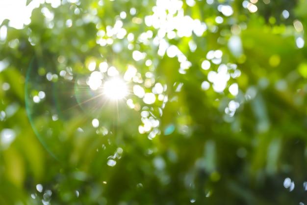 Folhas verdes bokeh turva fundo e clarão de luz