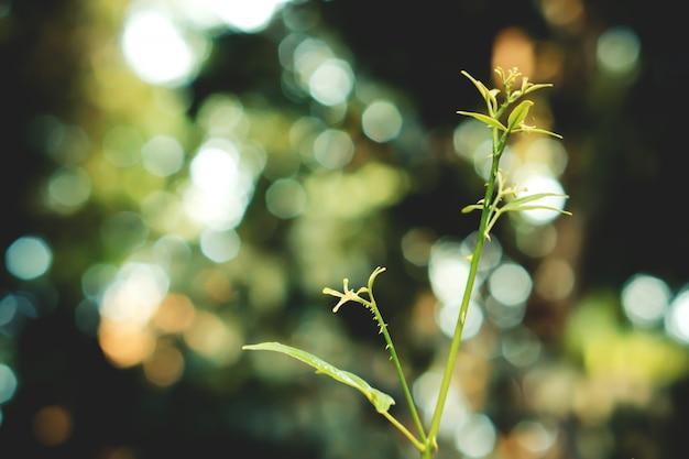 Folhas verdes com bokeh luz primavera natureza papel de parede plano de fundo