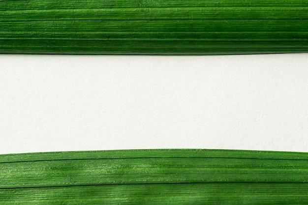 Folhas verdes com fundo de papel branco em branco