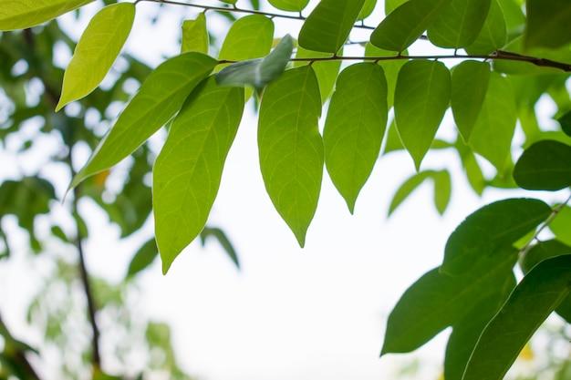 Folhas verdes com fundo desfocado natural