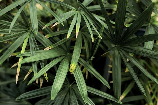 Folhas verdes com fundo