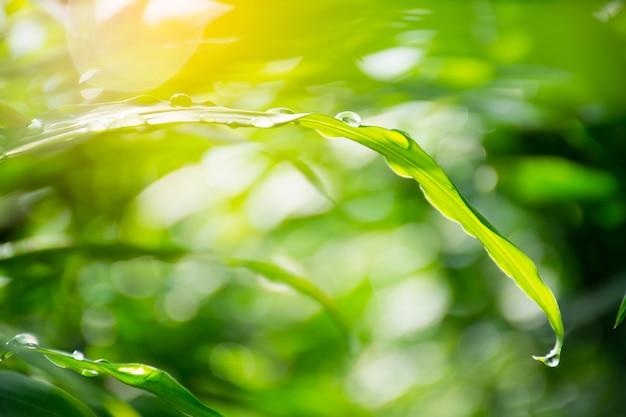 Folhas verdes com gotas de água de perto