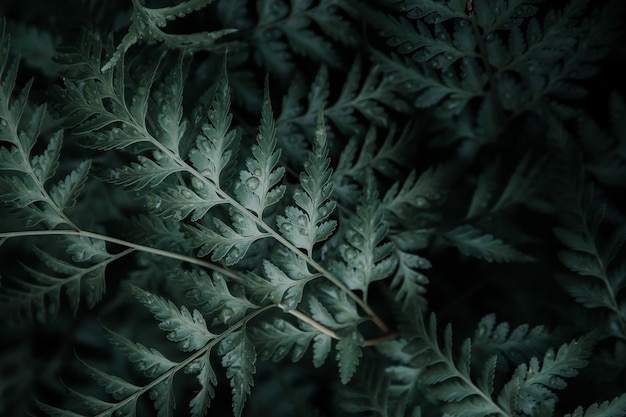 Folhas verdes com gotas de água por cima.
