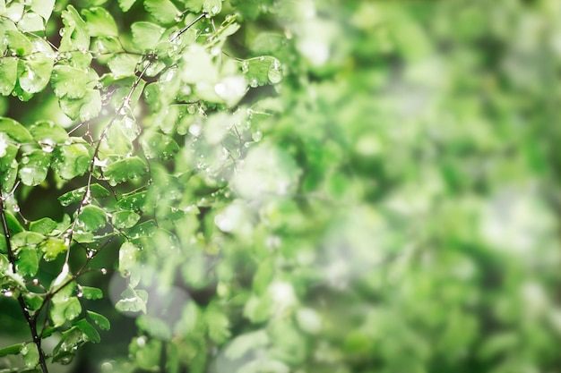 Folhas verdes com gotas de água