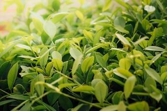 Folhas verdes com laranja claro