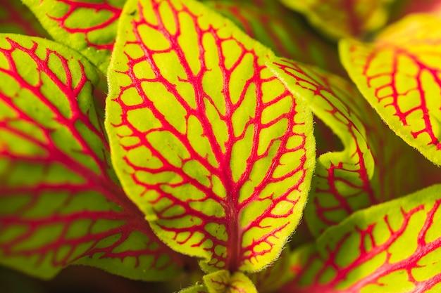 Folhas verdes com padrão vermelho