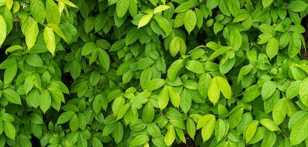 Folhas verdes com textura de gota de água, fundo verde natureza de folhagem
