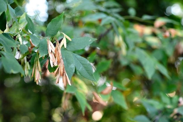 Folhas verdes com uma baleia em um dia ensolarado no início do outono. folhas verdes contra o céu. tema de outono