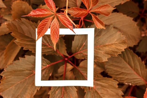 Folhas verdes como pano de fundo e uma folha branca de papel para o rótulo.