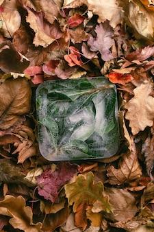 Folhas verdes congeladas em um cubo de gelo nas folhas laranjas de outono