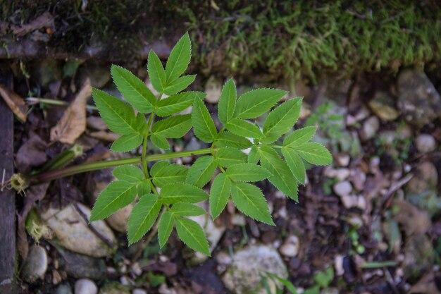 Folhas verdes contra a terra escura no verão.