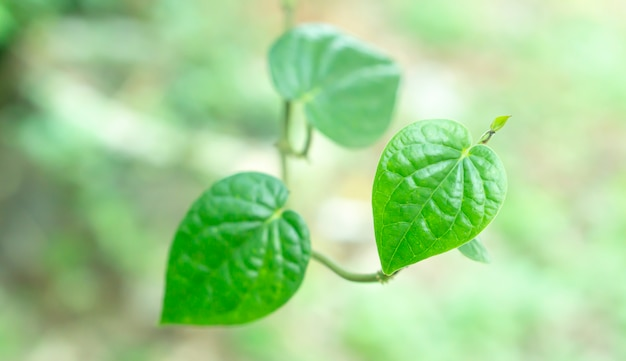 Folhas verdes coração forma primavera natureza