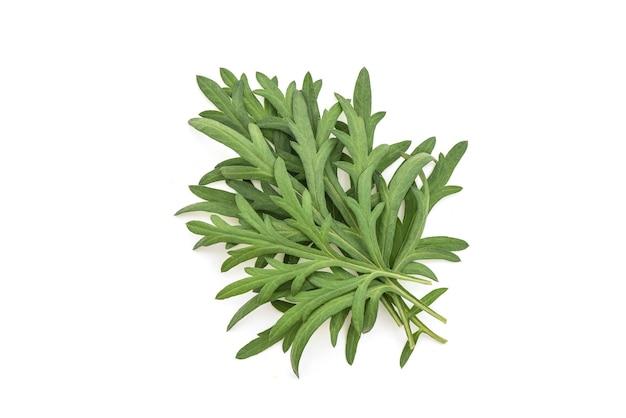 Folhas verdes da artemísia ou artemísia annua isoladas na vista de background.top branco, plana leigos.