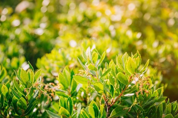 Folhas verdes da árvore à luz do sol