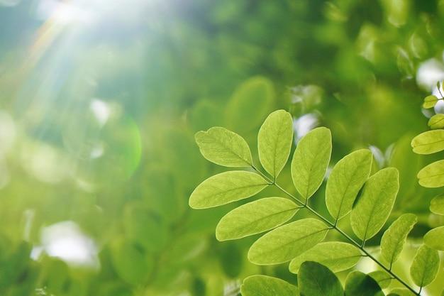 Folhas verdes da árvore na temporada de outono, fundo verde