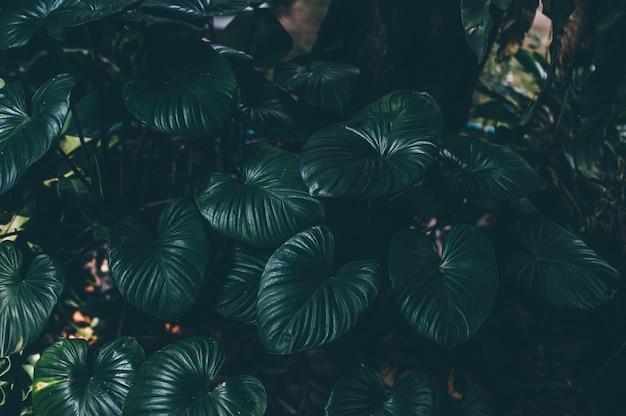Folhas verdes da natureza