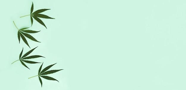 Folhas verdes da planta cannabis na luz verde
