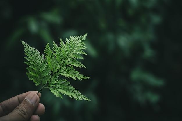 Folhas verdes da samambaia em uma mão humana. - fundo de tom escuro.