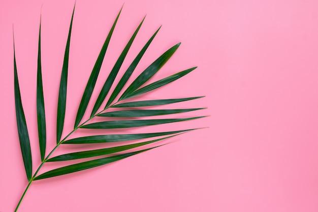 Folhas verdes das folhas de palmeira verdes tropicais da palmeira, conceito mínimo da vista superior. postura plana.