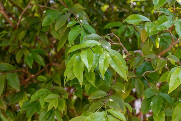 Folhas verdes de árvores formando painel de fundo