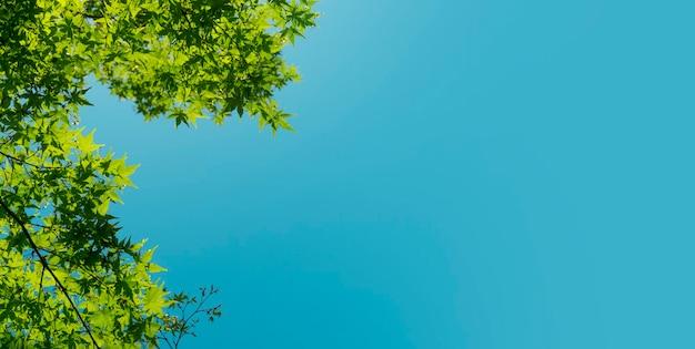 Folhas verdes de fundo de verão e primavera de uma árvore contra o fundo do sol e do céu azul relaxar ecologia descansar um