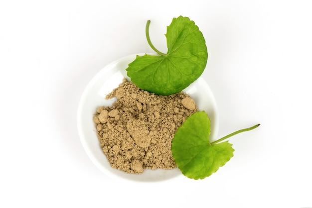 Folhas verdes de gotu kola ou centella asiatica e pó isolados no fundo branco.