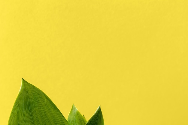Folhas verdes de lírio do vale, sobre um fundo amarelo brilhante com espaço de cópia. fundo brilhante e natural com folhagem verde. foco seletivo