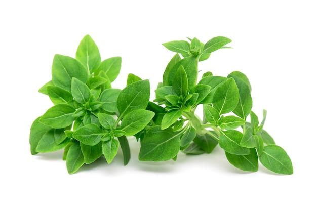 Folhas verdes de manjericão fresco jovem isolado, folhas de erva manjericão isoladas, vista superior