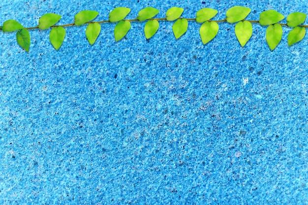 Folhas verdes de mexicano margarida natureza fronteira azul terraço chão
