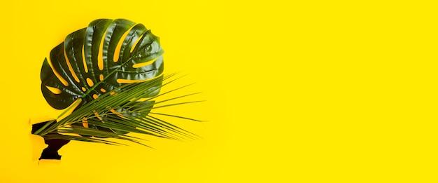 Folhas verdes de monstera e palmeiras em um buraco de banner de papelão rasgado