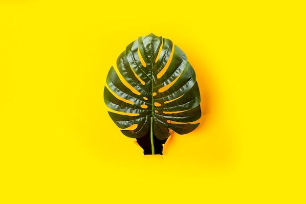 Folhas verdes de monstera e palmeiras em um buraco de papelão rasgado na superfície amarela
