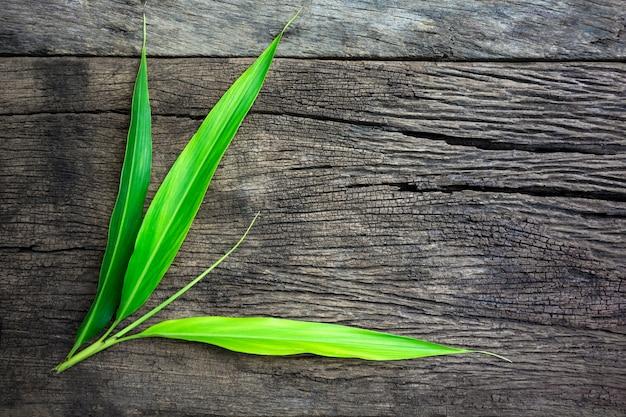 Folhas verdes de natureza no velho piso de madeira
