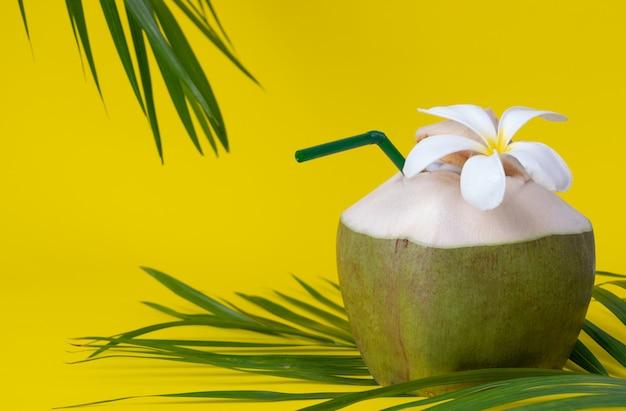 Folhas verdes de palmeira e coco fresco