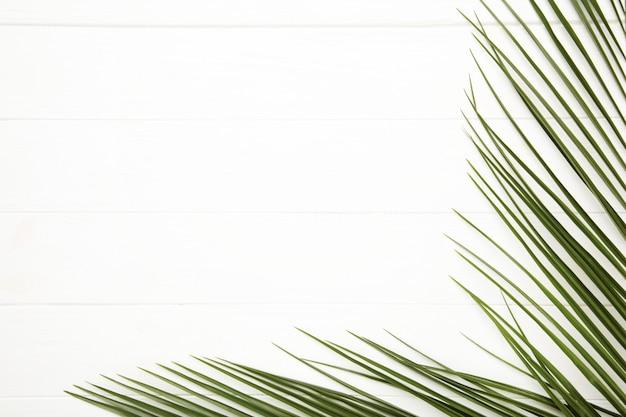 Folhas verdes de palmeira em fundo branco de madeira