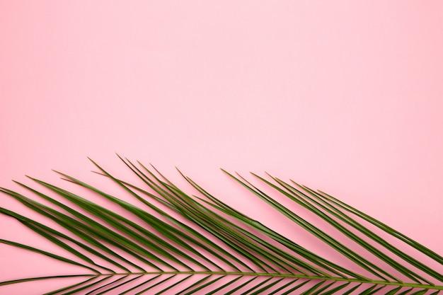 Folhas verdes de palmeira em fundo rosa com espaço de cópia