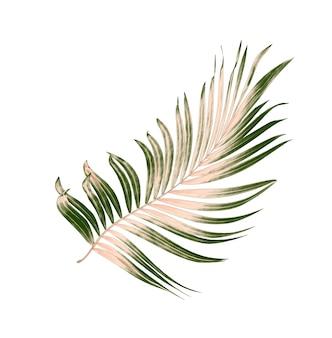 Folhas verdes de palmeira isoladas em fundo branco